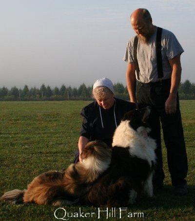 Bill and Ann with their farm Collies during filming by Animal Planet at Quaker Farm.